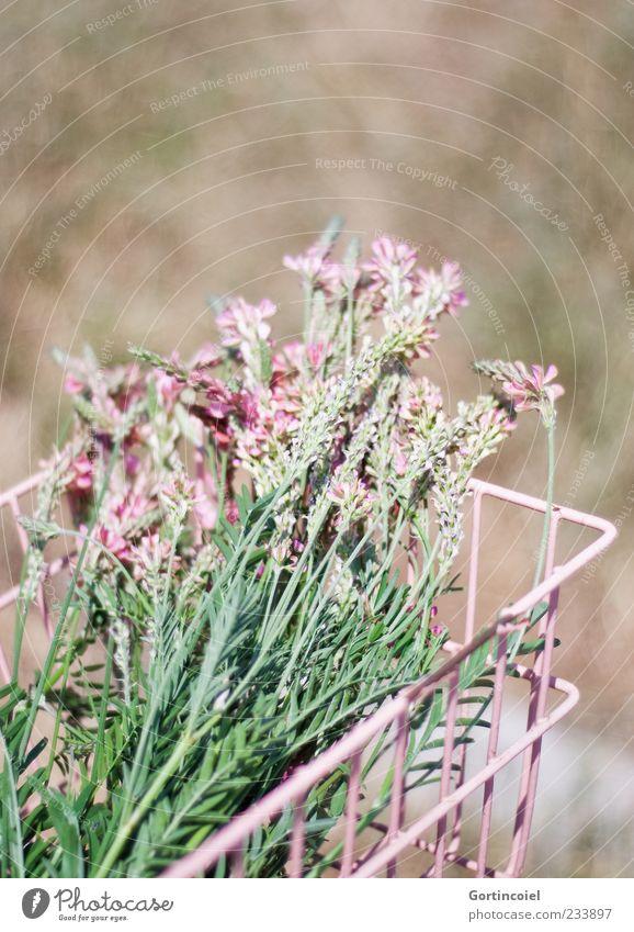Blumenpflücken Natur Pflanze Frühling Schönes Wetter Blüte rosa Blumenstrauß Korb Schmetterlingsblütler Farbfoto Gedeckte Farben Außenaufnahme Textfreiraum oben