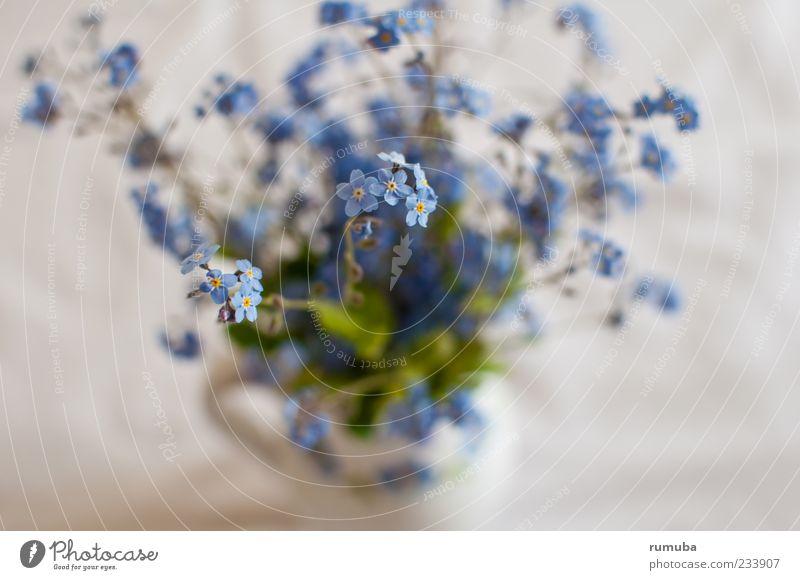 Blaublütler blau weiß grün Pflanze Blume Gefühle Blüte Frühling violett Blumenstrauß sanft Vase Blütenblatt malerisch Licht