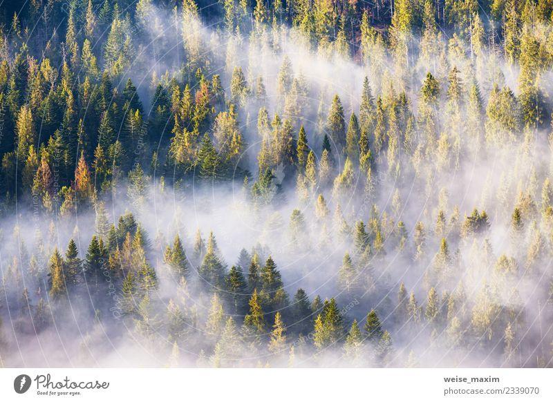 Nadelwald im Nebel, Nebelwald. Morgendlicher Nebel Design schön Ferien & Urlaub & Reisen Ausflug Abenteuer Ferne Sommer Berge u. Gebirge Dekoration & Verzierung