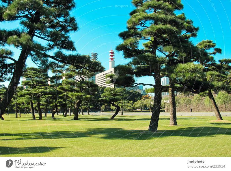 Garten in Japan Natur blau grün Baum Ferien & Urlaub & Reisen Pflanze Sommer Erholung Umwelt Gebäude Park elegant Tourismus Wachstum Asien Schönes Wetter