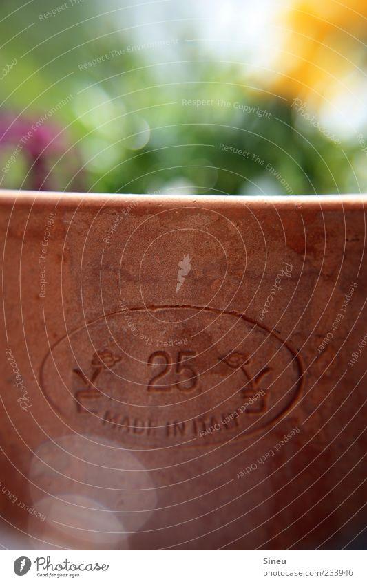 Made in Italy Pflanze Sommer Blume braun Schilder & Markierungen rund Ziffern & Zahlen Schönes Wetter Blumentopf Frühlingsgefühle Topfpflanze Schriftzeichen Unschärfe Terrakotta