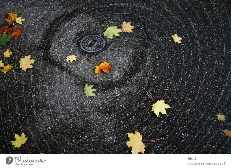 im engsten Kreise Blatt schwarz gelb Herbst Regen Wetter nass gold Platz trist liegen Klima Asphalt feucht Gully