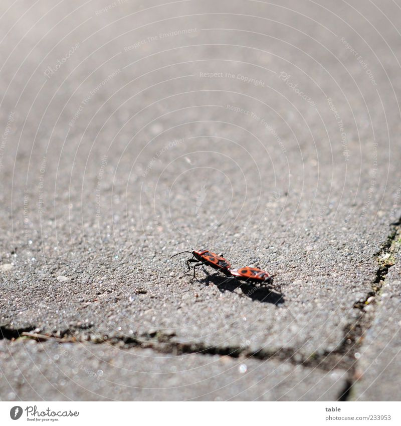 zu dir oder zu mir . . . Natur rot Sommer Tier schwarz Gefühle grau Bewegung Stein Zusammensein Tierpaar laufen Wildtier Beton berühren Schönes Wetter