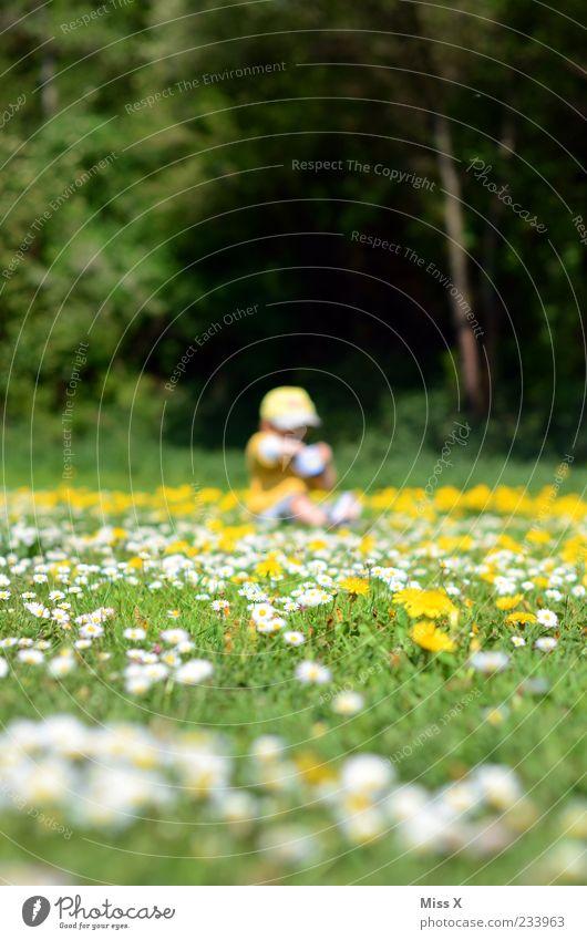 Blumenwiese Mensch Kind Natur Baum Blume Umwelt Wiese Spielen Gras klein Blüte Park Kindheit sitzen Schönes Wetter Kleinkind