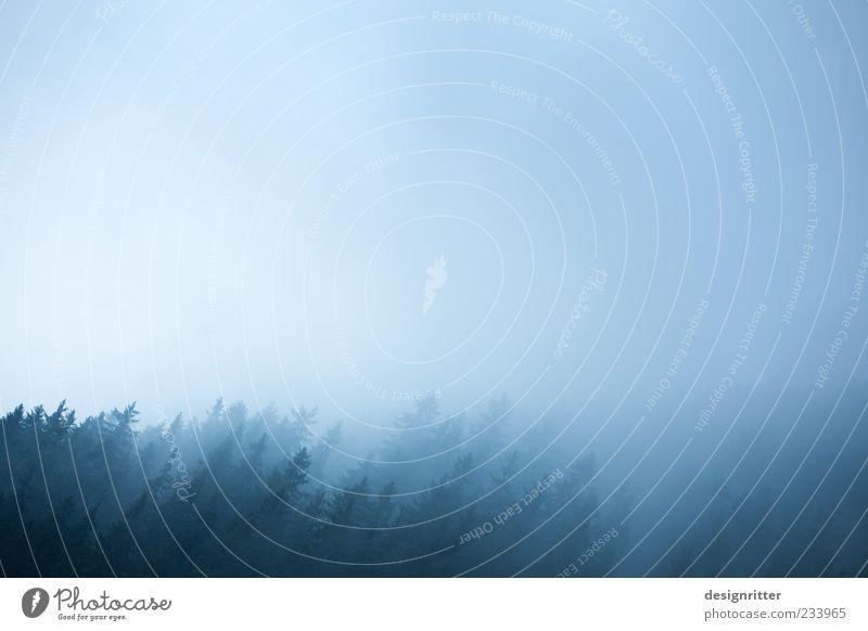 schief im Wald Himmel Wetter Nebel Pflanze Baum Nadelwald Umwelt Neigung Tanne Fichte Sauerland unklar schemenhaft Silhouette Farbfoto Außenaufnahme