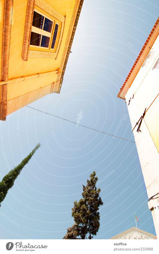 Süden Baum Pflanze Sommer Haus Fenster Wand Mauer Schönes Wetter Wolkenloser Himmel Portugal Blauer Himmel mediterran Lissabon