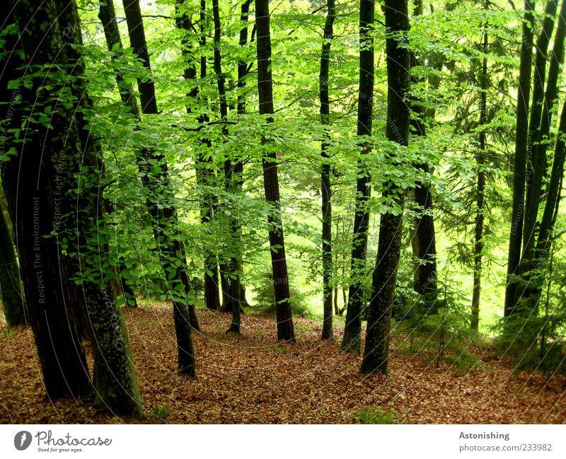 IIIIIIIIII Umwelt Natur Landschaft Pflanze Frühling Sommer Wetter Schönes Wetter Baum Blatt Wildpflanze Wald natürlich braun grün schwarz ruhig Baumstamm