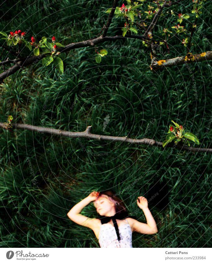 Everlasting Dream Mensch Frau Natur Jugendliche schön Baum Pflanze Einsamkeit Blatt ruhig Erwachsene Tod feminin Gras Junge Frau Blüte