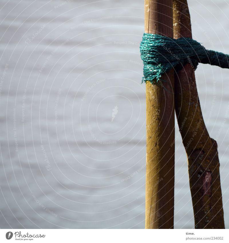 Spiekeroog | Schicksalsgemeinschaft grün Baum Holz Zusammensein Seil Schnur festhalten Schutz Zusammenhalt Baumstamm Partnerschaft Halt Knoten nachhaltig