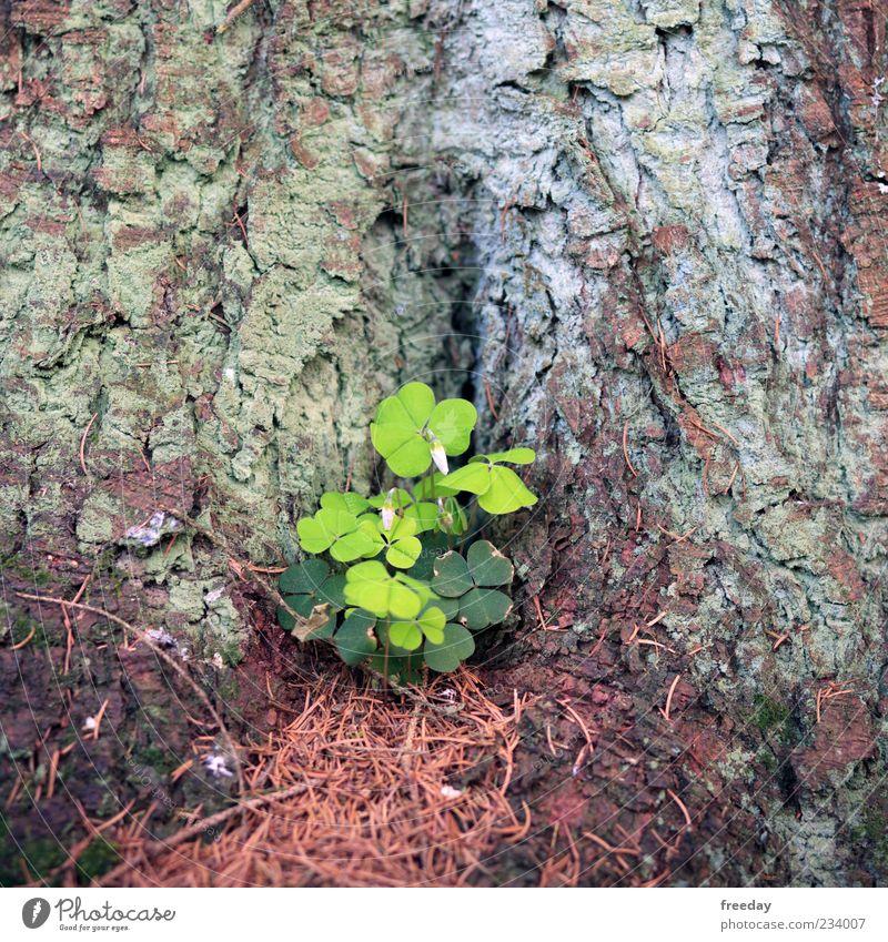 Das Glück lauert in jeder Ecke Umwelt Natur Frühling Sommer Pflanze Baum Blatt Wachstum Fröhlichkeit grün Zufriedenheit Lebensfreude Frühlingsgefühle Kraft Mut