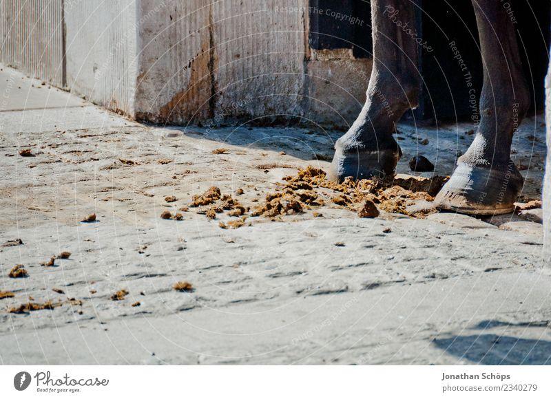 Ein Pferd steht in seiner eigenen Scheiße Tier Straße ästhetisch Tiergruppe Kot Herde Reiten Reitsport Pferdegangart Huf Übelriechend Misthaufen Hufeisen