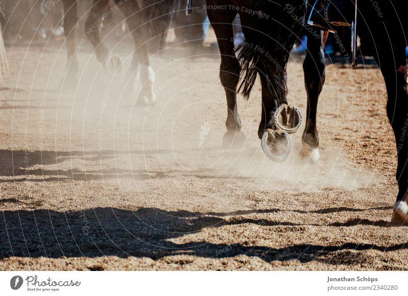 Pferde im Galopp Tier 3 Tiergruppe Herde ästhetisch Reiten Reitsport Pferderennen Pferdegangart Pferdekutsche Hufeisen Sand Rennsport aufwirbeln Dunst staubig