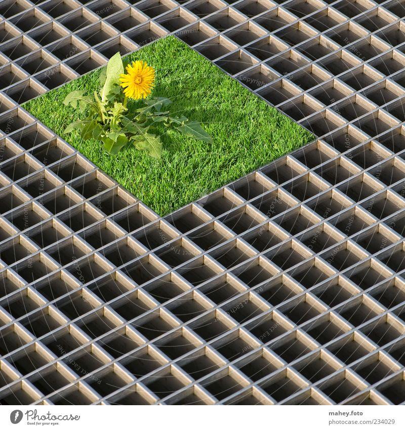 Klein, aber mein - Grundstück mit Rasenfläche Garten Pflanze Blume Löwenzahn Metall Stahl Gitterrost Coolness eckig gelb grün silber Zufriedenheit Ordnungsliebe