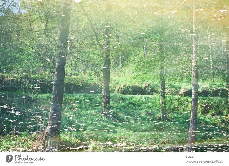 Das Orakel Umwelt Natur Landschaft Urelemente Wasser Klima Wetter Schönes Wetter Baum Wald Seeufer Moor Sumpf grün Stimmung nachhaltig Wachstum