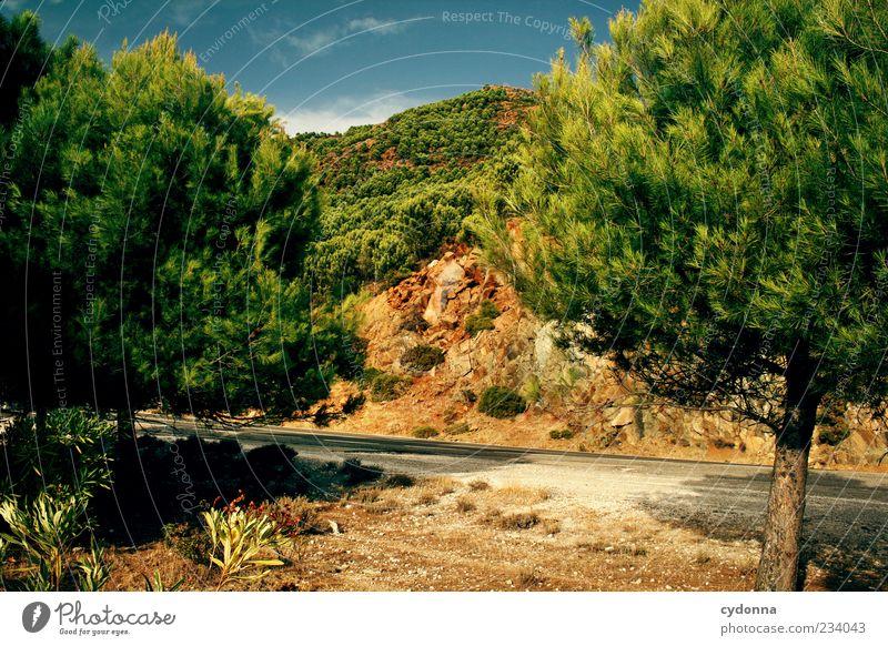 Heiße Idylle Natur schön Baum Sommer Einsamkeit ruhig Erholung Straße Umwelt Leben Landschaft Berge u. Gebirge Freiheit Wärme Wege & Pfade träumen