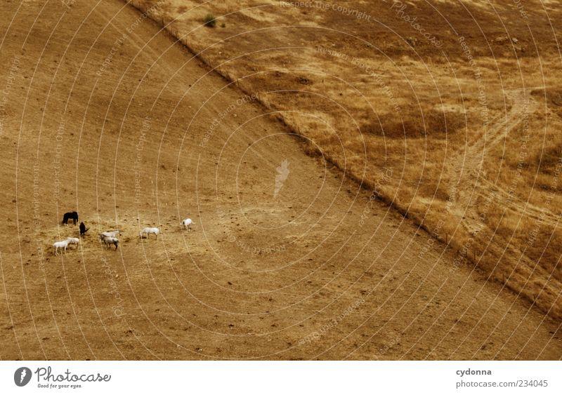Mittagszeit Ferne Freiheit Umwelt Natur Landschaft Erde Sommer Wiese Wege & Pfade Pferd Herde Bewegung Einsamkeit einzigartig entdecken Idylle Leben ruhig schön