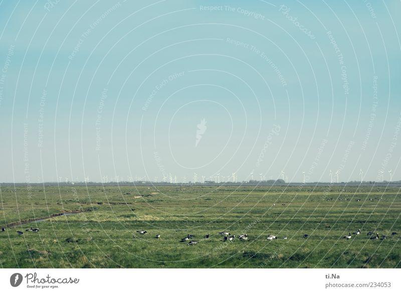 Schöne Aussicht | Katinger Watt Himmel Natur blau grün Pflanze Tier Umwelt Landschaft Horizont Wildtier mehrere viele Schönes Wetter Windkraftanlage Fressen