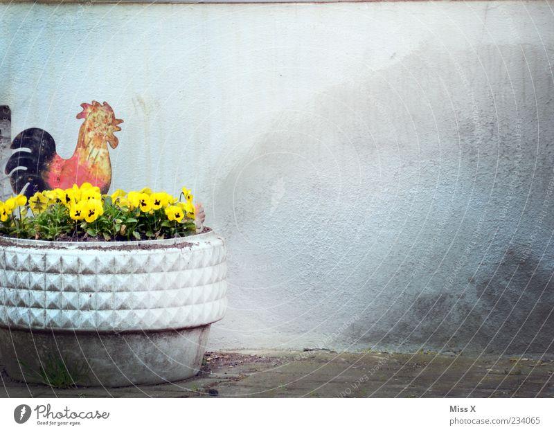 Gockel-Deko Dekoration & Verzierung Frühling Sommer Pflanze Blume Blüte Kitsch mehrfarbig Hahn Stiefmütterchen Blumentopf Wand Figur Farbfoto Außenaufnahme