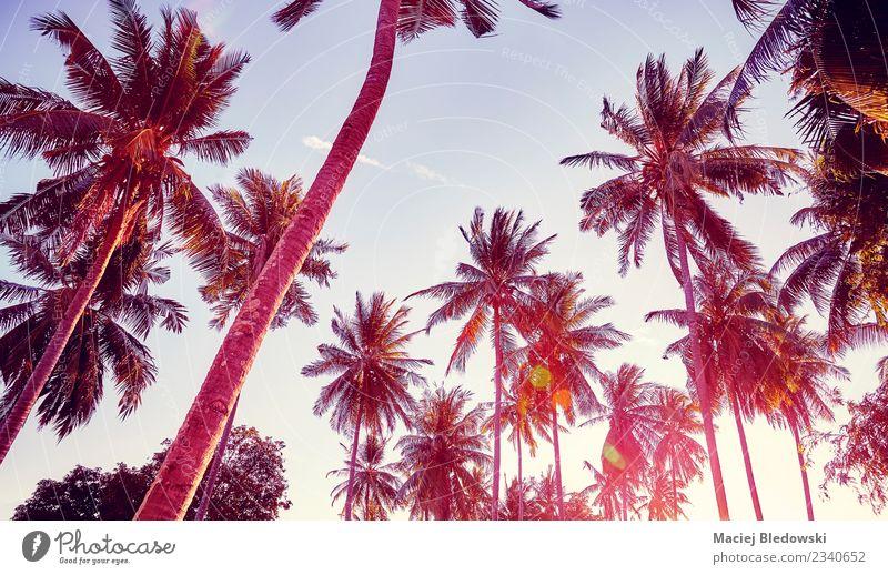 Kokospalmen Silhouetten bei Sonnenuntergang. exotisch schön Erholung Ferien & Urlaub & Reisen Freiheit Sommer Sommerurlaub Strand Insel Tapete Natur Landschaft