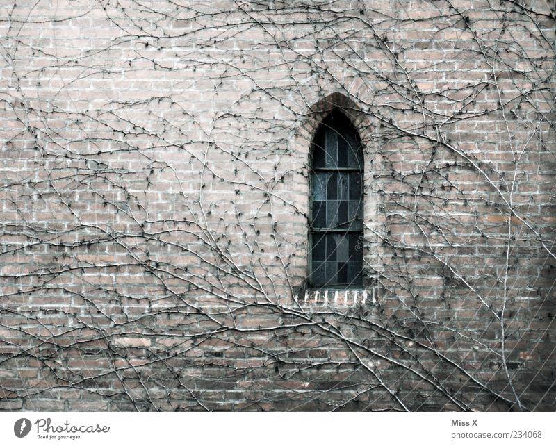 Fensterchen alt Pflanze Fenster Herbst kalt Wand Religion & Glaube Mauer Gebäude Kirche Wachstum Wandel & Veränderung trist Trauer Ende Bauwerk