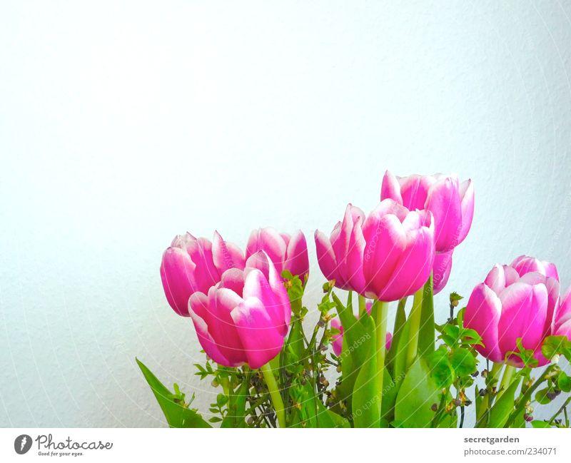 wanddekoration zum muttertag. weiß grün schön Pflanze Blume Farbe Wand Blüte Frühling rosa frisch Dekoration & Verzierung Vergänglichkeit Kitsch Blühend Stengel
