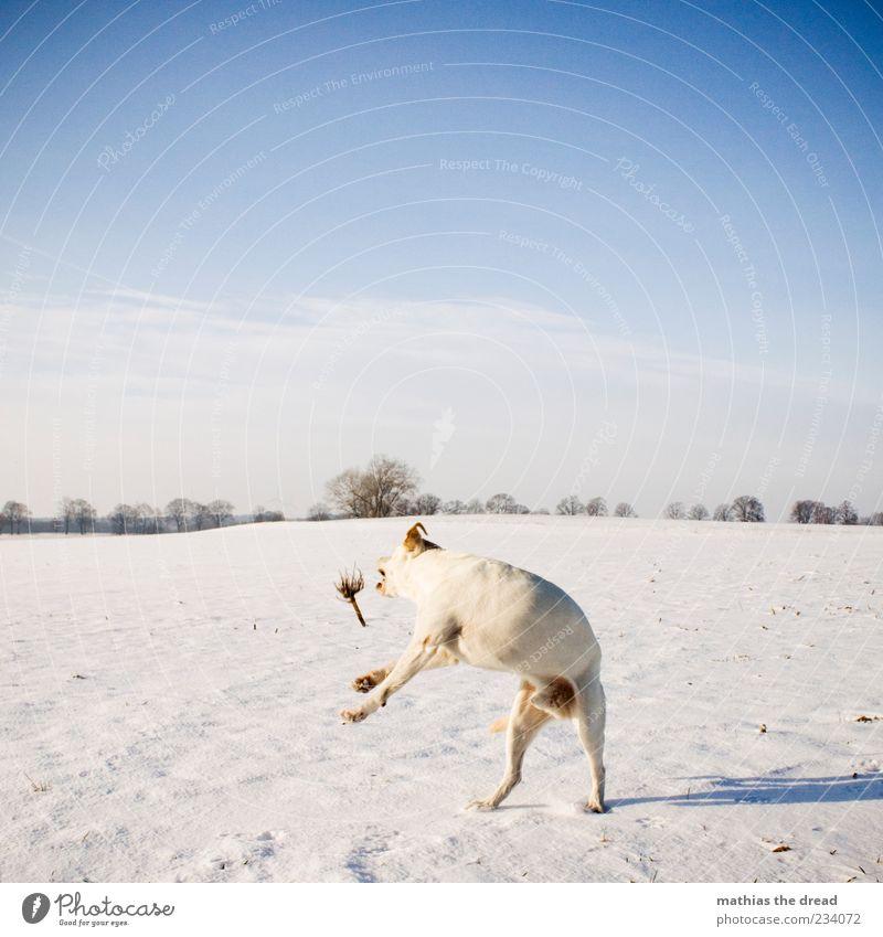 ALTES WINTERBILD Hund Himmel Natur weiß Baum Pflanze Wolken Ferne Umwelt Landschaft Wiese kalt Schnee Bewegung springen Horizont
