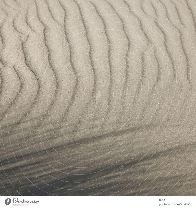 Spiekeroog | windspiel Natur Umwelt Sand außergewöhnlich Halm Sandstrand Muster Strukturen & Formen Wellenlinie