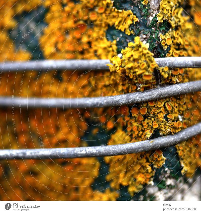 Spiekeroog | Wegelagerer Pflanze Klima Holz Metall gelb grau grün Umwelt Vergänglichkeit Wandel & Veränderung Draht Metallwaren Flechten Sporenpflanze