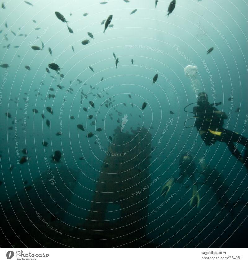 ANZIEHUNGSKRAFT Mann Natur Wasser Ferien & Urlaub & Reisen Meer Menschengruppe Wasserfahrzeug Freizeit & Hobby Abenteuer mehrere Tourismus Fisch Reisefotografie unten tauchen Wasseroberfläche