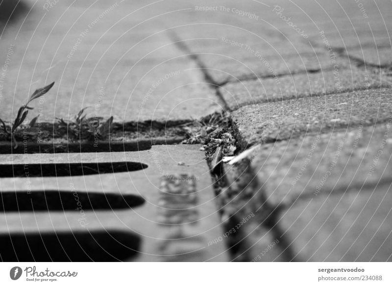 Die Arroganz der Gosse Straße Gully Pflastersteine Stein Beton Metall Stahl dreckig fest trashig trist unten schwarz Endzeitstimmung modern Schwarzweißfoto