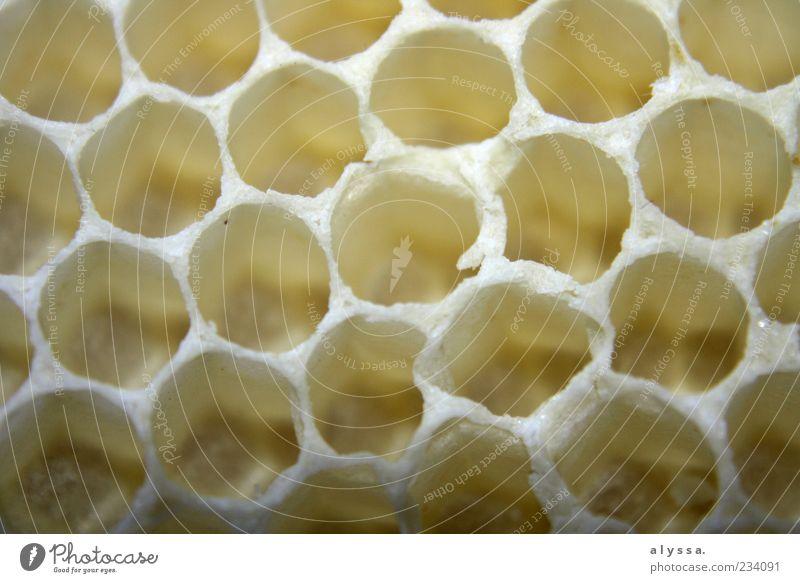 Honeybee's home. Natur Wabe Wabenmuster gelb weiß Detailaufnahme Muster Strukturen & Formen Menschenleer Nahaufnahme rund