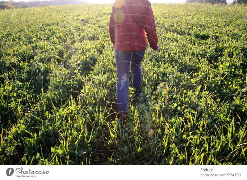 sunday Mensch Natur Einsamkeit Wiese Landschaft Freiheit Bewegung Gras hell gehen Feld laufen Jeanshose Schönes Wetter Jacke kopflos