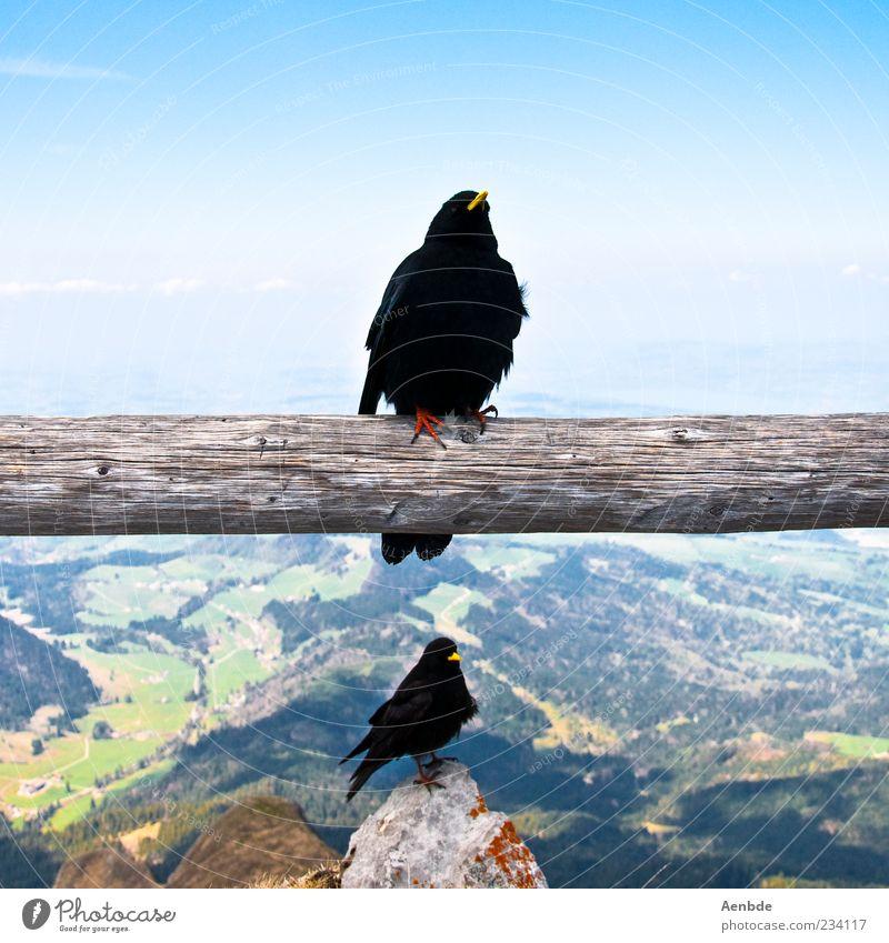 Ausblick Himmel Natur blau Sommer Tier Berge u. Gebirge oben Luft Vogel Felsen ästhetisch Alpen festhalten Schönes Wetter unten Baumstamm