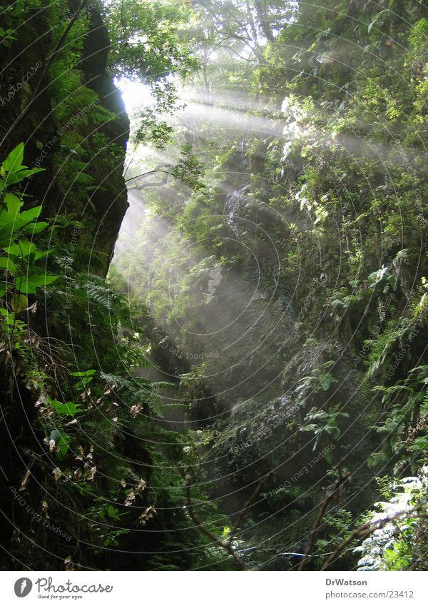 Sonnenstrahlen Schlucht Pflanze Felswand Beleuchtung Barranco Echte Farne Felsen