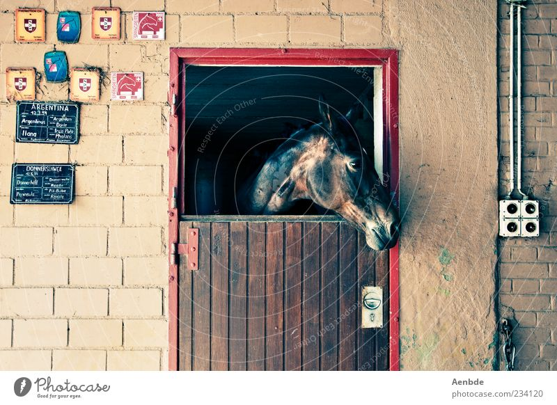 Pferdestall Stil Freizeit & Hobby Reiten Menschenleer Mauer Wand Tier 1 Blick warten glänzend Tür Schilder & Markierungen mehrfarbig Fensterblick beobachten