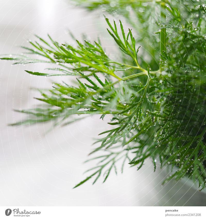 Dill zum | Fischfutter Lebensmittel Kräuter & Gewürze Ernährung authentisch Duft frisch Gesundheit lecker Fischgericht grün Wassertropfen Farbfoto Innenaufnahme