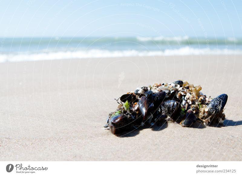 Eigenheimsiedlung Wasser Meer Strand Sand Küste hell Zusammensein Wellen Sicherheit Tiergruppe viele Warmherzigkeit Schutz nah Nordsee Schönes Wetter