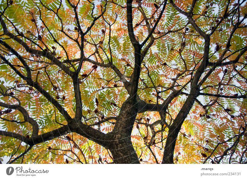 Geäst Himmel Natur Baum Blatt Herbst hoch Netzwerk Ast chaotisch eng Baumkrone welk verblüht verzweigt Blätterdach