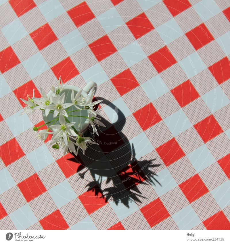 Blümchen... Tisch Pflanze Blume Wildpflanze Vase kariert Kunststoff Blühend ästhetisch einfach Freundlichkeit frisch schön rot schwarz weiß Design einzigartig