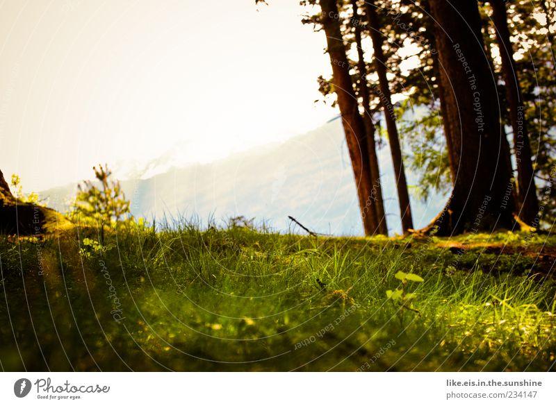 der perfekte platz für ein picknick Sinnesorgane Erholung ruhig Duft Sommer Berge u. Gebirge Umwelt Natur Landschaft Pflanze Horizont Frühling Schönes Wetter