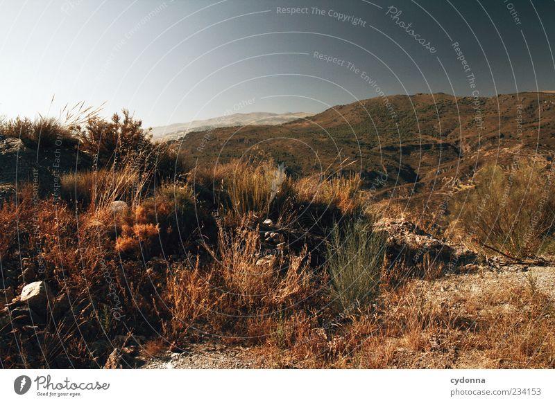 Weite Ferne Freiheit Umwelt Natur Landschaft Erde Wolkenloser Himmel Sommer Klima Wärme Dürre Gras Sträucher Berge u. Gebirge Einsamkeit Horizont Idylle Leben
