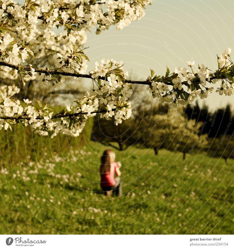 Frühling Mädchen Blüten Wiese Bäume Kind 1 Mensch 3-8 Jahre Kindheit Natur Landschaft Pflanze Schönes Wetter Baum Erholung festhalten träumen frei schön grün