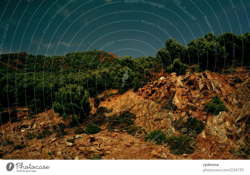 Schattiges Plätzchen gesucht Natur Baum Sommer Farbe Einsamkeit ruhig Wald Ferne Umwelt Leben Landschaft Berge u. Gebirge Freiheit Wärme Wege & Pfade träumen