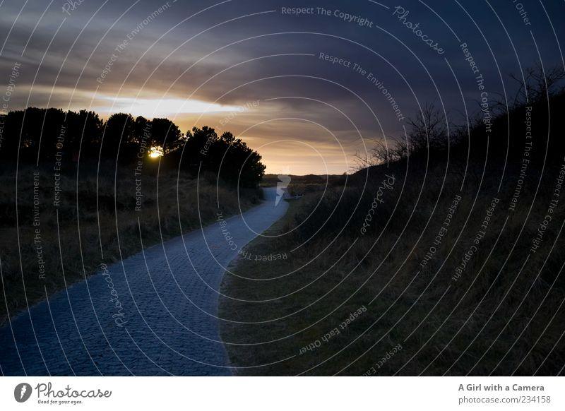 Spiekeroog l don't eliminate me Umwelt Natur Landschaft Pflanze Wolken Horizont Wetter Schönes Wetter Baum Sträucher Hügel außergewöhnlich dunkel gigantisch