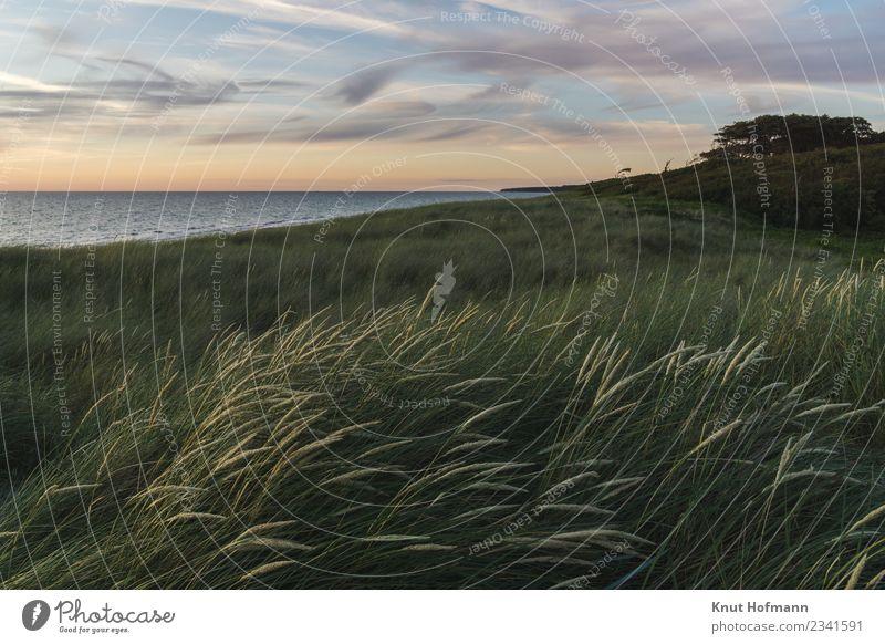 Blick über den Ostseestrand Natur Ferien & Urlaub & Reisen Sommer Wasser Landschaft Sonne Meer Erholung ruhig Strand natürlich Küste Gras Glück Freiheit