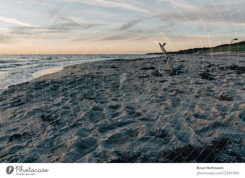 einsamer Baum am Strand Glück Erholung ruhig Ferien & Urlaub & Reisen Ausflug Abenteuer Ferne Freiheit Camping Fahrradtour Sommer Sonne Meer Wellen Umwelt Natur