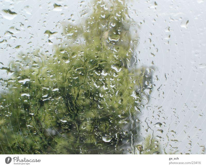 Regenschauer Wetter Wassertropfen nass Aussicht Fensterscheibe