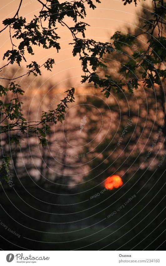 Dämmerung Himmel Natur Baum Sonne Blatt ruhig Wald Landschaft Traurigkeit Abenddämmerung Textfreiraum Zweige u. Äste Hochformat