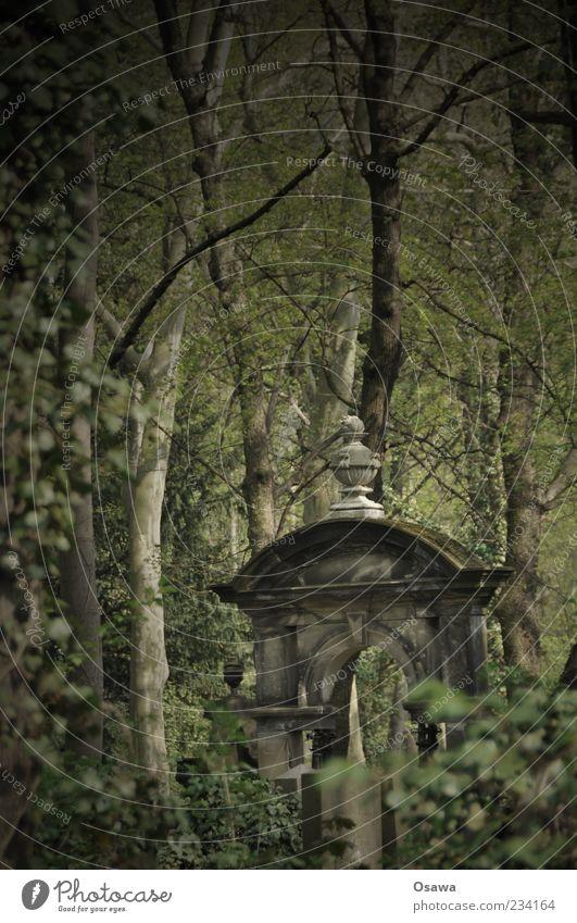 Waldfriedhof Friedhof Grabstein Gruft ruhig Menschenleer Tod Religion & Glaube Zweige u. Äste gruselig Grabmal Stein erinnern Beerdigung Trauer Natur
