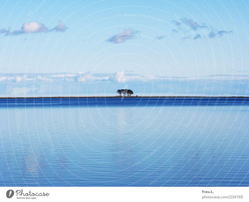 Ostsee Himmel blau Wasser Baum Meer Wolken ruhig Ferne Erholung Landschaft Küste Horizont Schönes Wetter Wasseroberfläche Blauer Himmel